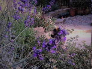 plantings & ground works to scent/pollinator garden.